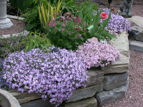 Loved these when I was small Mom always had flocks in her rockery